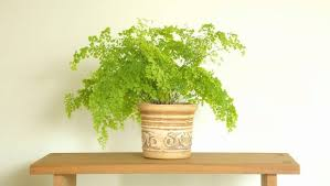 how to choose the right indoor plant for tricky spots stuff co nz
