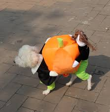 Carrying Halloween Costume Halloween Puppy Pet Carrying Pumpkin Costume Dog Cat Clothes