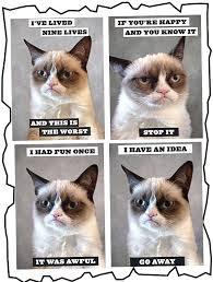 Grumpy Cat Meme I Had Fun Once - i had fun once grumpy cat meme 100 images fine art a la tard