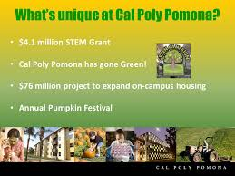 california state polytechnic university pomona counselor