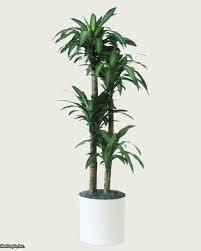best low light indoor trees q a northern light for indoor trees great hgtv garden trends