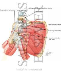 Human Anatomy Anterior Joint Anterior And Sagittal Views
