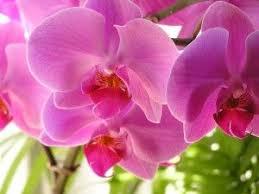 Flower Orchid Les 25 Meilleures Idées De La Catégorie Types Of Orchids Sur