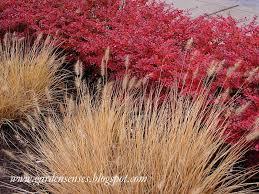 garden sense fall color shrubs