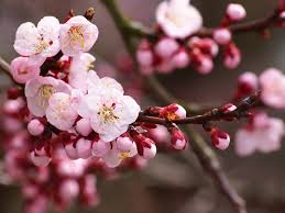 fruit trees san diego guide the best trees to plant install it