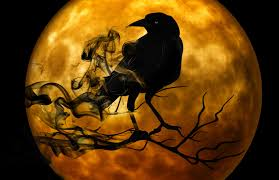 scary halloween photos free crow standing on branch in front of full moon scary halloween