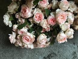 desien field garden roses jpg format u003d1500w