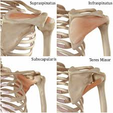 Subscapularis And Supraspinatus 10 Best Exercises To Strengthen Your Rotator Cuff Builtlean