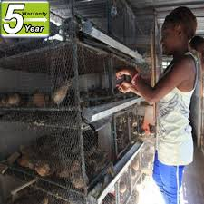 gabbie per usato quaglia gabbie per galline ovaiole buy product on alibaba