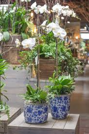 Indoor Plant Design by 132 Best Indoor Plants Images On Pinterest Indoor Plants