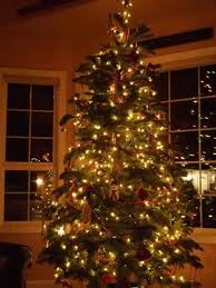 decorations ideas most beautiful indoor trees tree