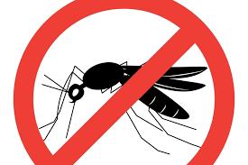 moustique dans ma chambre moustique des astuces naturelles et efficaces