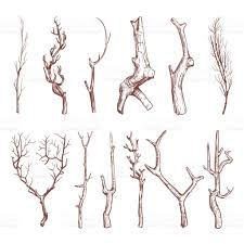 sketch wood twigs broken tree branches vector set stock vector