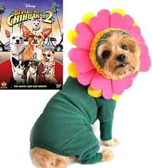 Halloween Costumes Small Dogs 59 Dog Halloween Costumes Images Dog Halloween