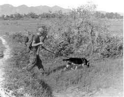 belgian shepherd us army a brief history of dogs at war inverse