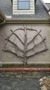 76 best espalier images on pinterest garden ideas espalier