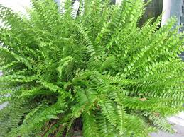 221 best plants flowers gardens patios courtyards images on