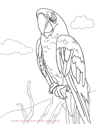 macaw coloring page free to download 5723