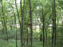 Forest Backdrop Goodlettsville Tn Forest Backdrop Of Goodlettsville Photo