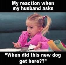 Friday Funny Meme - canine rehabilitation and conditioning group盪 blog archive