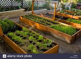 raised vegetable garden beds lasagne garden with screened covers