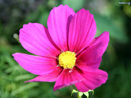 Images Of Pretty Flowers - flower pictures images photos