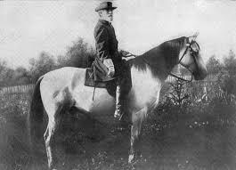 traveller horse wikipedia