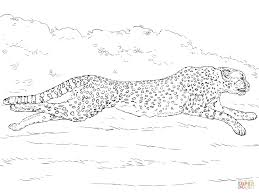 running cheetah coloring page free printable coloring pages