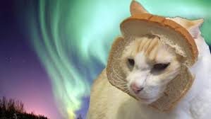 Cat Breading Meme - here are your best pictures of breaded cats