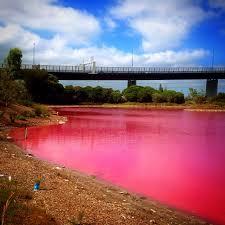 Pink Lake Shebenlee