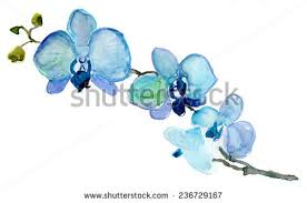 blue orchid flower blue orchid stock images royalty free images vectors