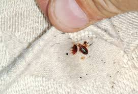 Bed Bugs In Ohio Bed Bugs U2013 Entomology Today