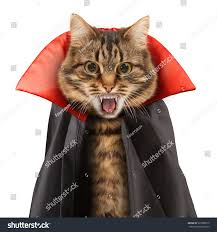 free halloween images on white background cat evil on white background halloween stock photo 325080710