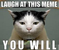 Star Wars Cat Meme - yoda know best shared by yanito freminoshi on we heart it