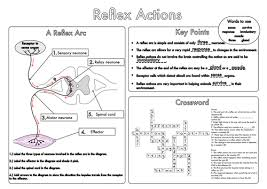 nervous system key words worksheet by bobfrazzle teaching