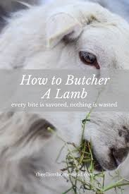 how to butcher a lamb