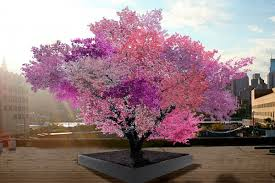 this colorful tree is designed to grow 40 types of fruit the verge