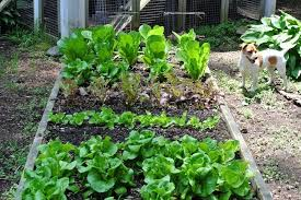 garden designs for beginners indelink com