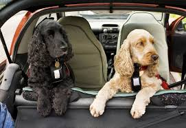The safe way to travel with your dog in the car safebee