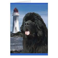 newfoundland gifts on zazzle