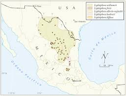 Map Of Guanajuato Mexico by I Dug Up Peyote In The Mexican Desert Vice
