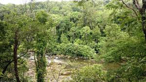 Deep Forest Green File Chalakkudy River In Deep Forest Panoramio Jpg Wikimedia