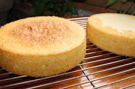 vanilla sponge cake recipe gretchen u0027s bakery