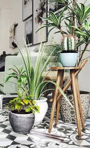 home interior plants best 25 living room plants ideas on apartment plants