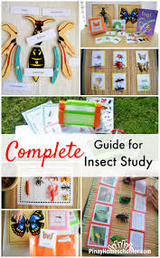 complete insect study guide pinay homeschooler pinterest insects