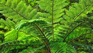 Tropical Rainforest Plant List - endangered plants of the philippines sciencing