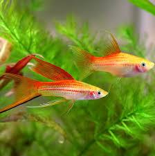 freshwater aquarium fish pictures and names fish pet photos