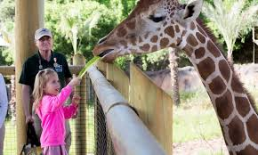 san antonio zoo lights coupon san antonio zoo san antonio zoo groupon