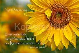 sprüche zur guten besserung es ist unglaublich gute besserung sonnenblumen www