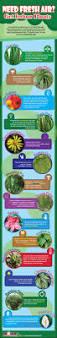 need fresh air get indoor plants infographic indoor gardening